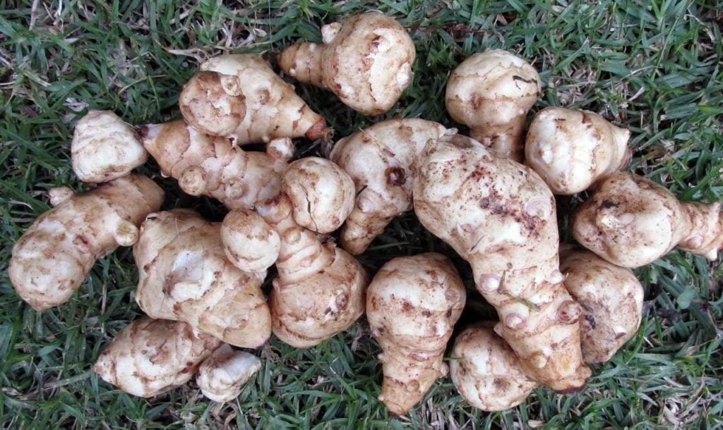 Legumes de saisons 1
