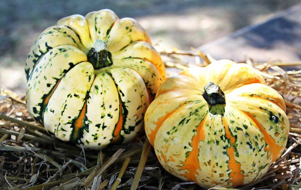 Legumes de saisons 4